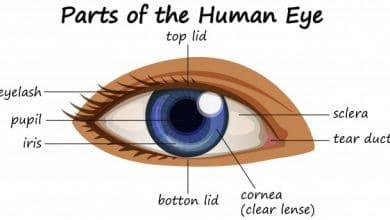 Photo of العين البشرية